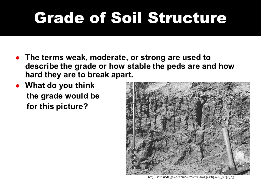 Grade of Soil Structure l The terms weak, moderate, or strong are used to describe the grade or how stable the peds are and how hard they are to break