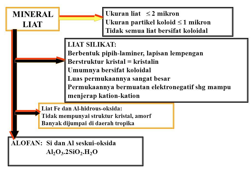 HUBUNGAN KEJENUHAN Al dan HASIL BEANS 10 20 30 40 50 60 70 % kejenuhan Al % hasil maks.