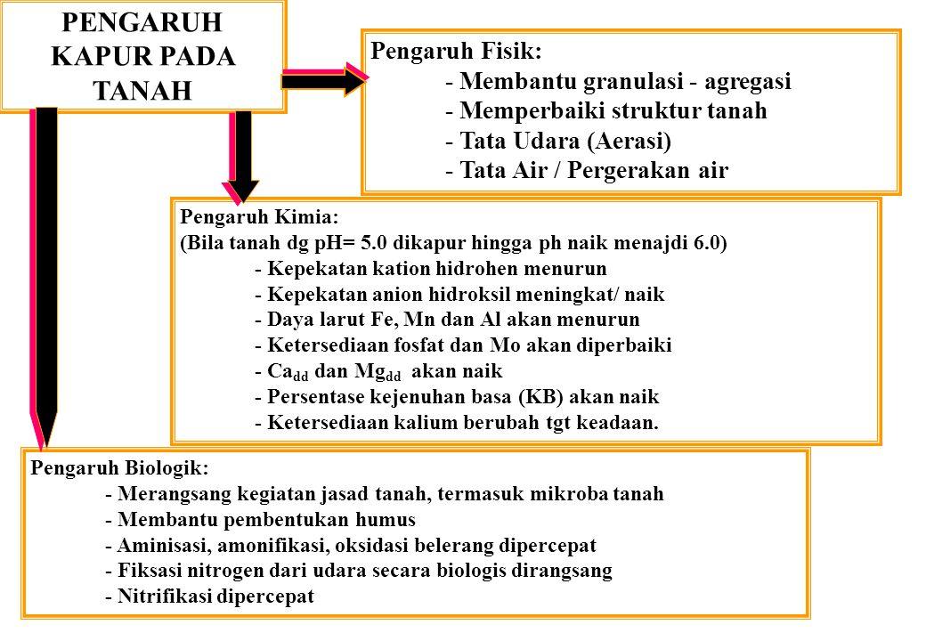 PENGARUH KAPUR PADA TANAH Pengaruh Fisik: - Membantu granulasi - agregasi - Memperbaiki struktur tanah - Tata Udara (Aerasi) - Tata Air / Pergerakan a