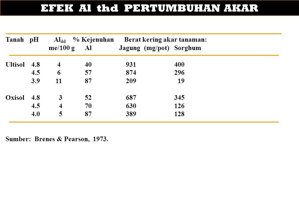 EFEK Al thd PERTUMBUHAN AKAR TanahpHAl dd % Kejenuhan Berat kering akar tanaman: me/100 g Al Jagung (mg/pot)Sorghum Ultisol 4.8 4 40931400 4.5 6 57874