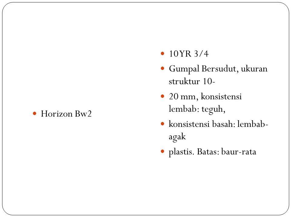 Horizon Bw2 10 YR 3/4 Gumpal Bersudut, ukuran struktur 10- 20 mm, konsistensi lembab: teguh, konsistensi basah: lembab- agak plastis. Batas: baur-rata