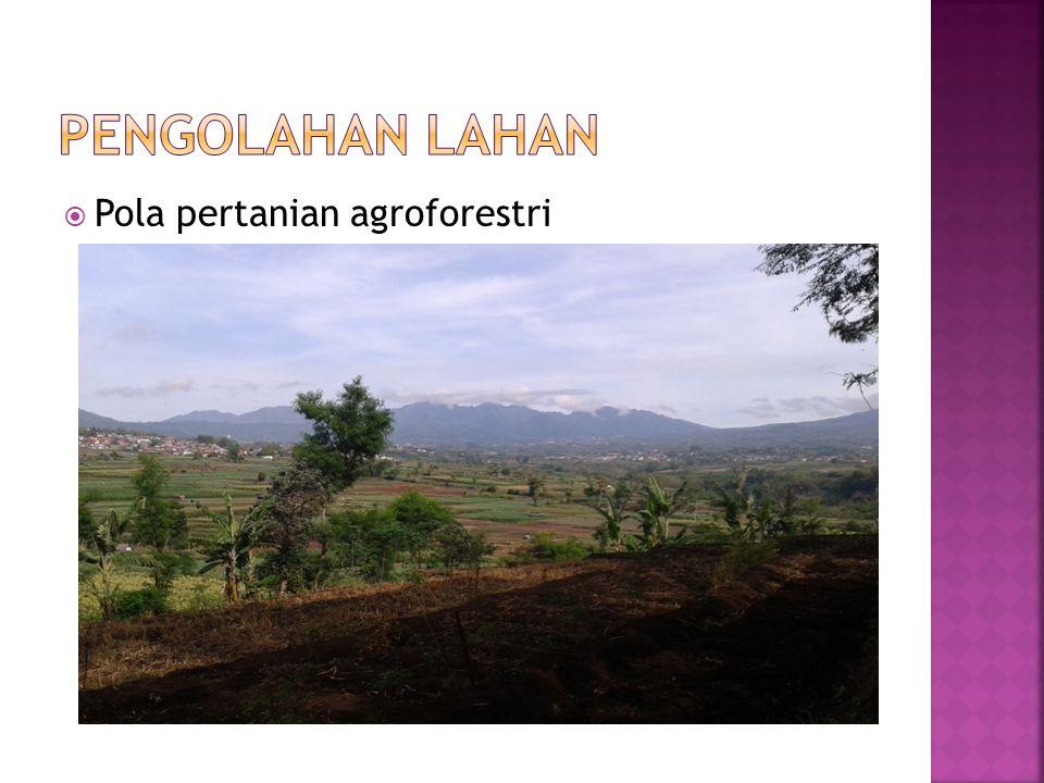  Pola pertanian agroforestri
