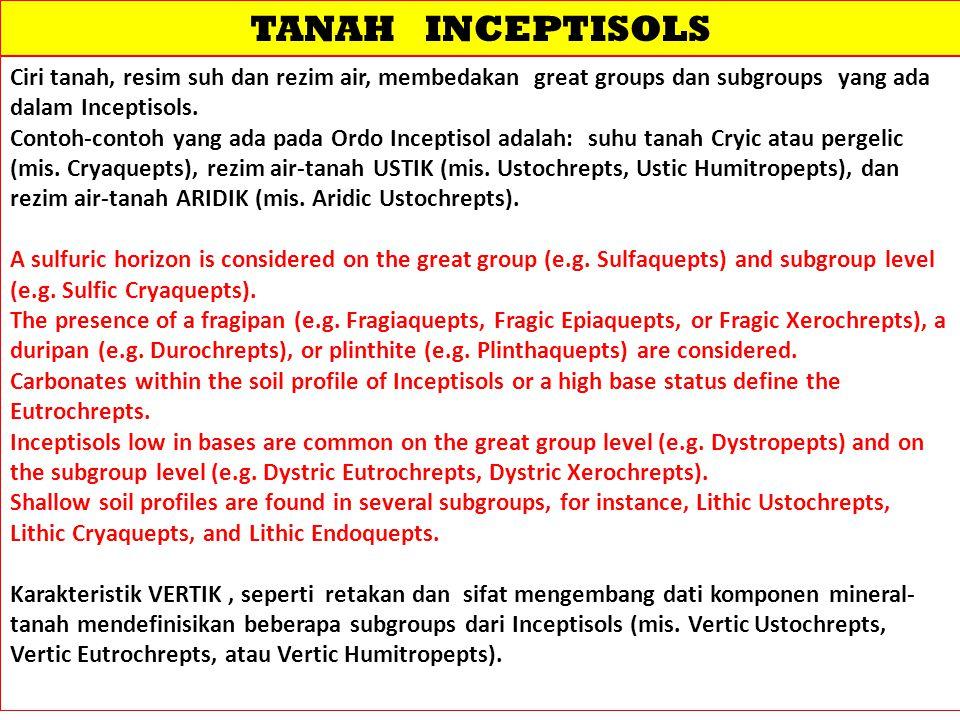 TANAH INCEPTISOLS Ciri tanah, resim suh dan rezim air, membedakan great groups dan subgroups yang ada dalam Inceptisols. Contoh-contoh yang ada pada O
