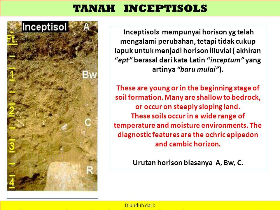 TANAH INCEPTISOLS Diunduh dari: http://www.stthomas.edu/geography/faculty/kelley/physgeog/soils/taxonomy/soil_taxonomy.htm………………. 26/2/2013 Inceptisol