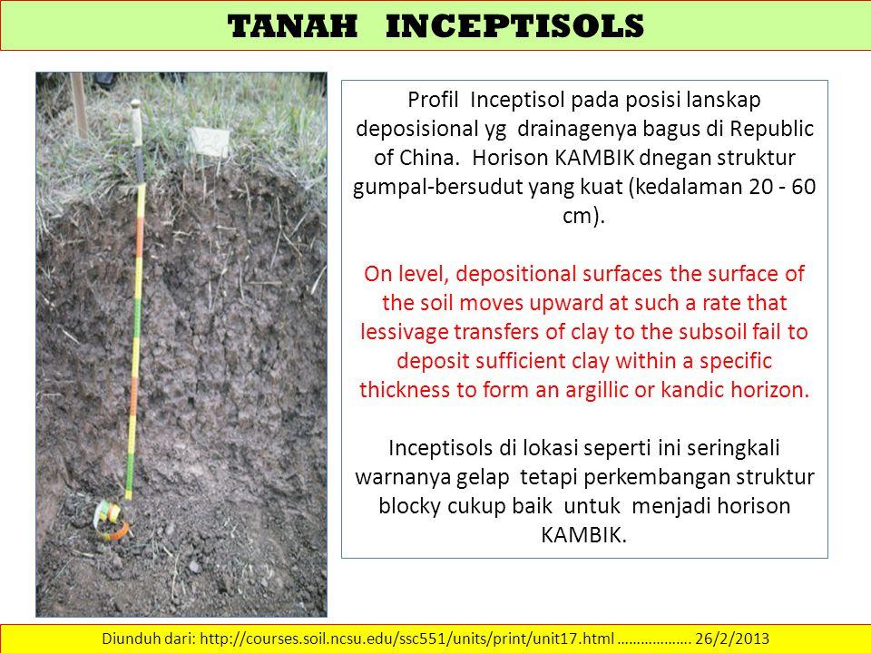 TANAH INCEPTISOLS Diunduh dari: http://courses.soil.ncsu.edu/ssc551/units/print/unit17.html ………………. 26/2/2013 Profil Inceptisol pada posisi lanskap de