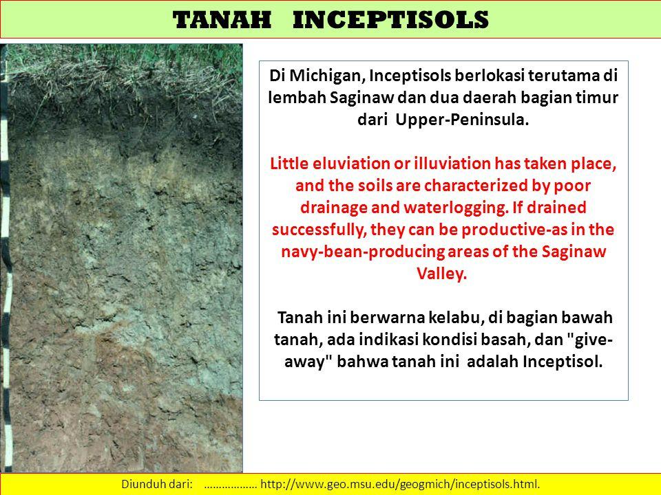TANAH INCEPTISOLS Diunduh dari: ……………… http://www.geo.msu.edu/geogmich/inceptisols.html. Di Michigan, Inceptisols berlokasi terutama di lembah Saginaw