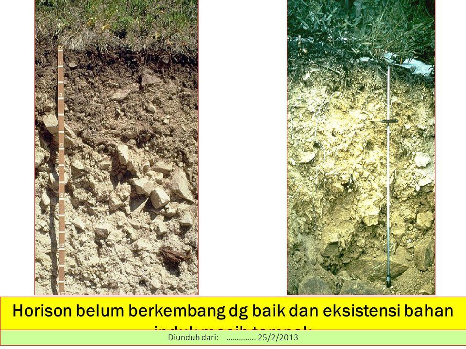 Horison belum berkembang dg baik dan eksistensi bahan induk masih tampak Diunduh dari: ………….. 25/2/2013