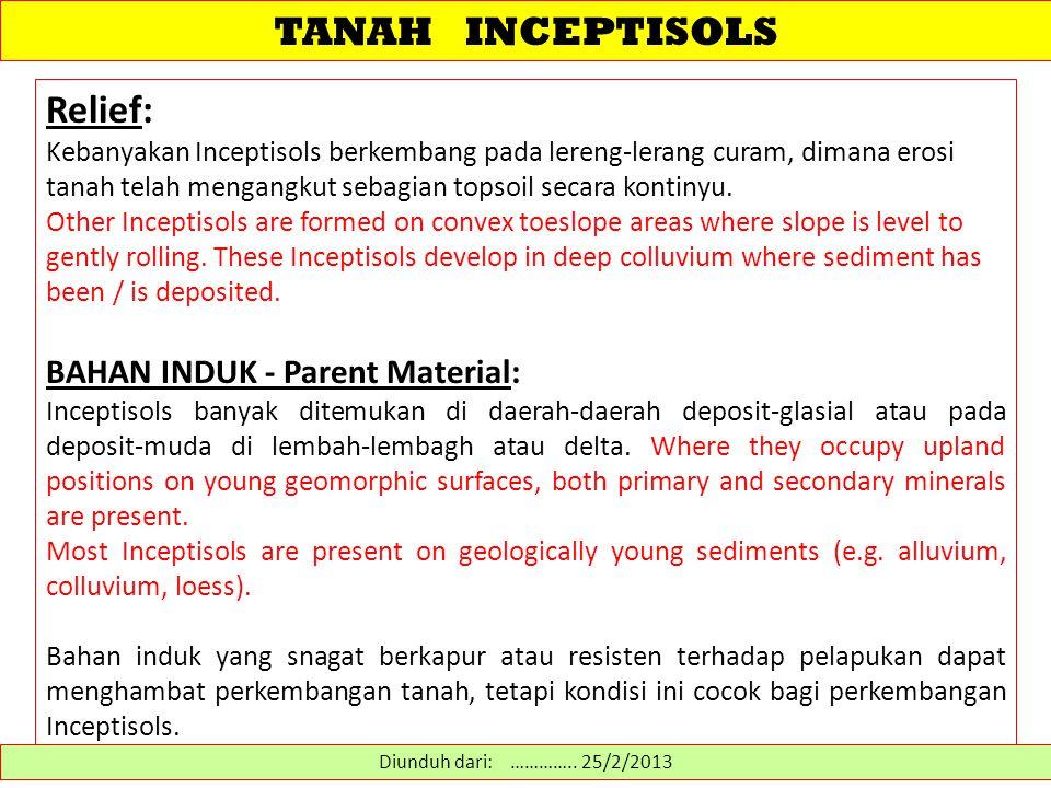 TANAH INCEPTISOLS WAKTU - Time: Kebanyakan Inceptisols berkembang pada lanskap muda (< Holocene), dimana waktu membatasi perkembangan penciri tanah.