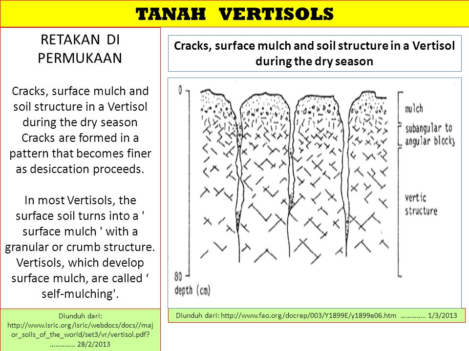 TANAH VERTISOLS RETAKAN DI PERMUKAAN Cracks, surface mulch and soil structure in a Vertisol during the dry season Cracks are formed in a pattern that