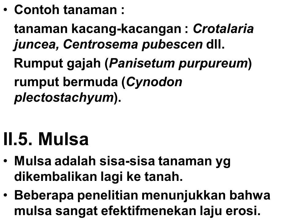 Contoh tanaman : tanaman kacang-kacangan : Crotalaria juncea, Centrosema pubescen dll. Rumput gajah (Panisetum purpureum) rumput bermuda (Cynodon plec