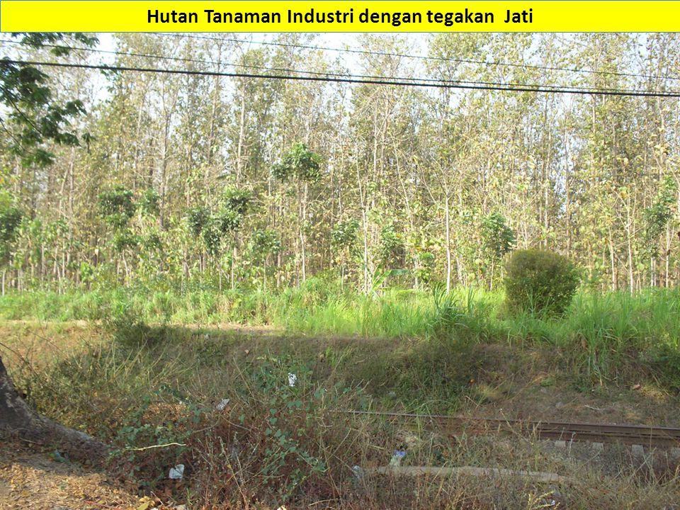 Hutan Tanaman Industri dengan tegakan Jati