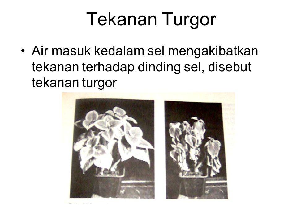 Tekanan Turgor Air masuk kedalam sel mengakibatkan tekanan terhadap dinding sel, disebut tekanan turgor