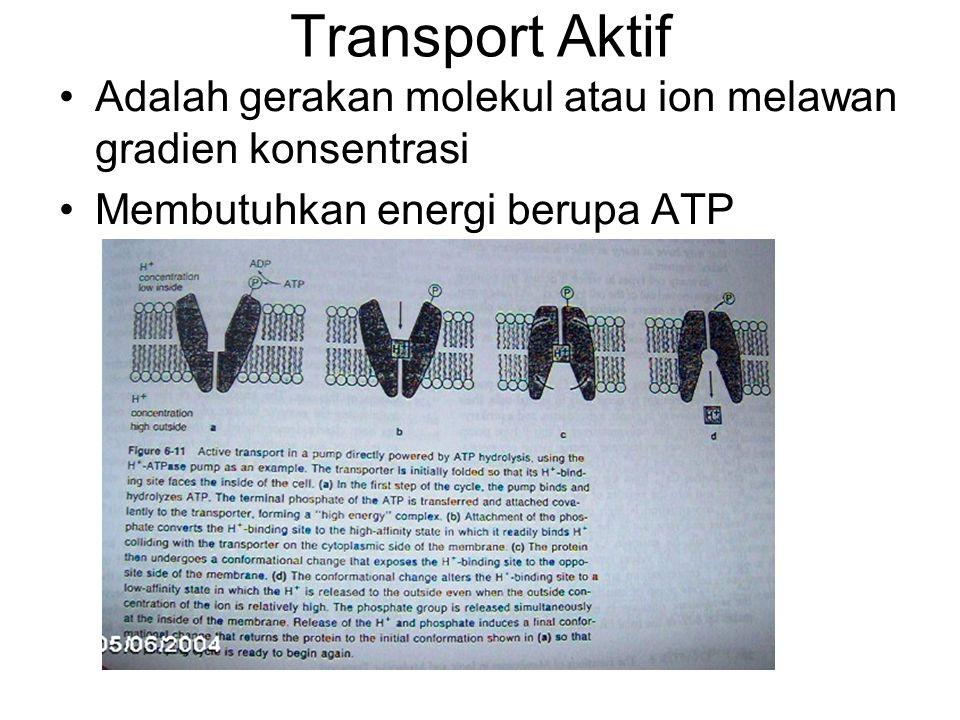 Transport Aktif Adalah gerakan molekul atau ion melawan gradien konsentrasi Membutuhkan energi berupa ATP
