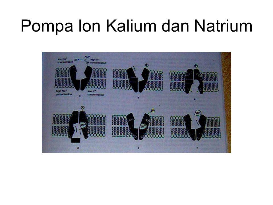 Pompa Ion Kalium dan Natrium