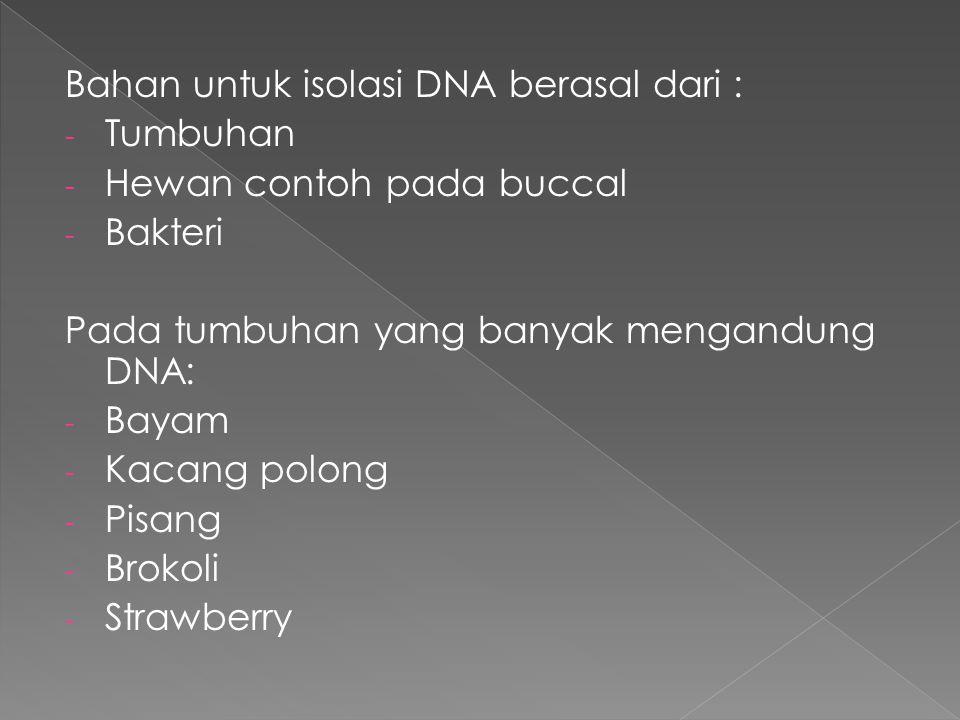 Bahan untuk isolasi DNA berasal dari : - Tumbuhan - Hewan contoh pada buccal - Bakteri Pada tumbuhan yang banyak mengandung DNA: - Bayam - Kacang polong - Pisang - Brokoli - Strawberry