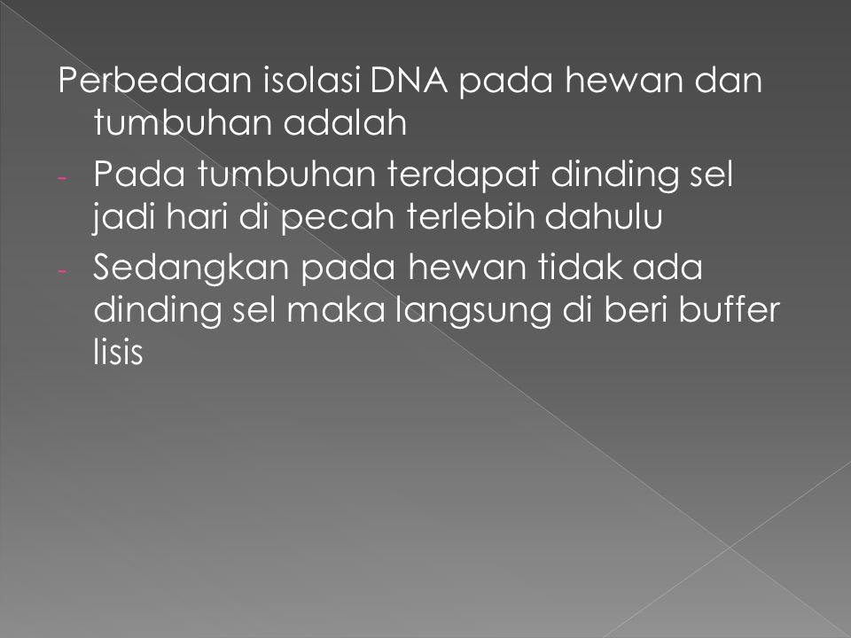 Perbedaan isolasi DNA pada hewan dan tumbuhan adalah - Pada tumbuhan terdapat dinding sel jadi hari di pecah terlebih dahulu - Sedangkan pada hewan tidak ada dinding sel maka langsung di beri buffer lisis
