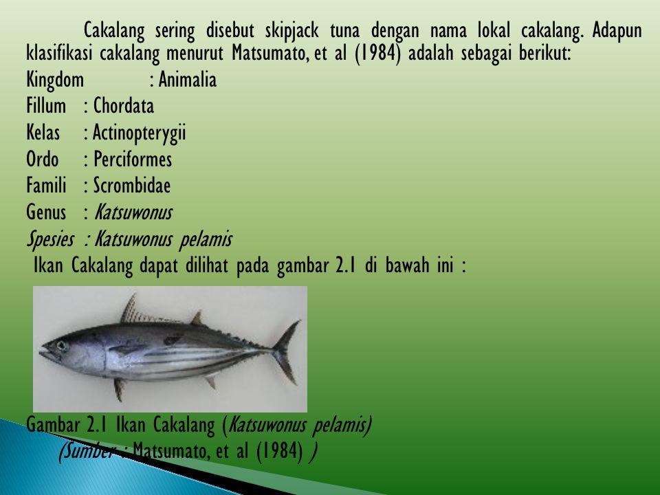 Cakalang sering disebut skipjack tuna dengan nama lokal cakalang. Adapun klasifikasi cakalang menurut Matsumato, et al (1984) adalah sebagai berikut: