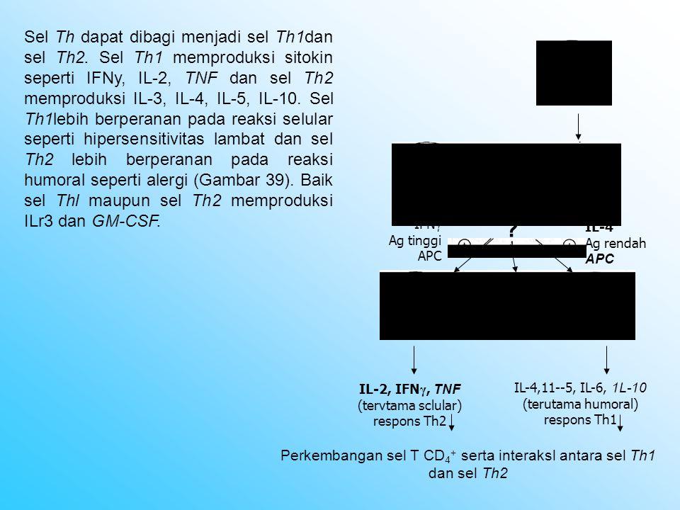 Sel Th dapat dibagi menjadi sel Th1dan sel Th2. Sel Th1 memproduksi sitokin seperti IFNy, IL-2, TNF dan sel Th2 memproduksi IL-3, IL-4, IL-5, IL-10. S