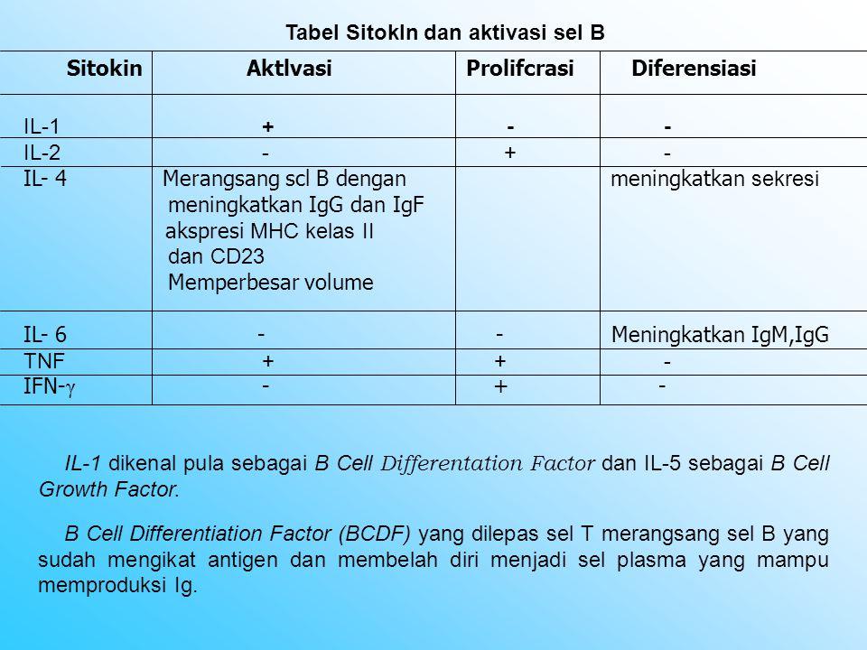 Sitokin Aktlvasi Prolifcrasi Diferensiasi Tabel Sitokln dan aktivasi sel B IL-1+ - - IL-2- + - IL- 4 Merangsang scl B dengan meningkatkan sekresi meni