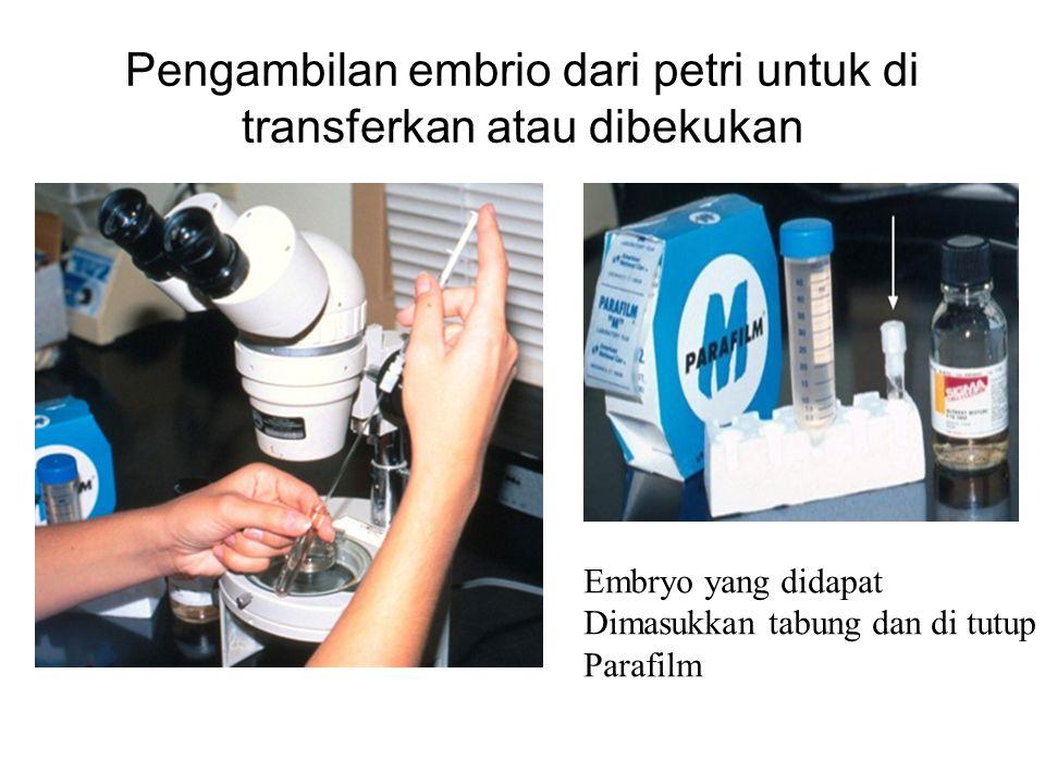 Pengambilan embrio dari petri untuk di transferkan atau dibekukan Embryo yang didapat Dimasukkan tabung dan di tutup Parafilm