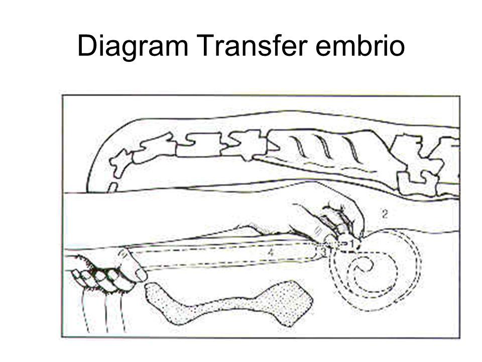 Diagram Transfer embrio