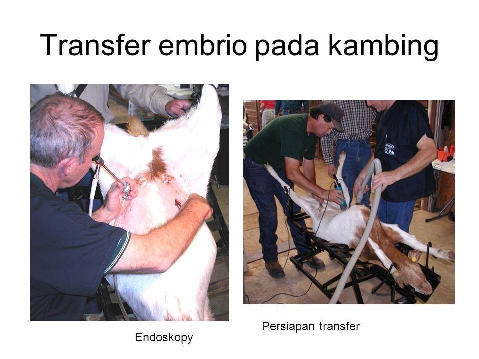 Transfer embrio pada kambing Persiapan transfer Endoskopy