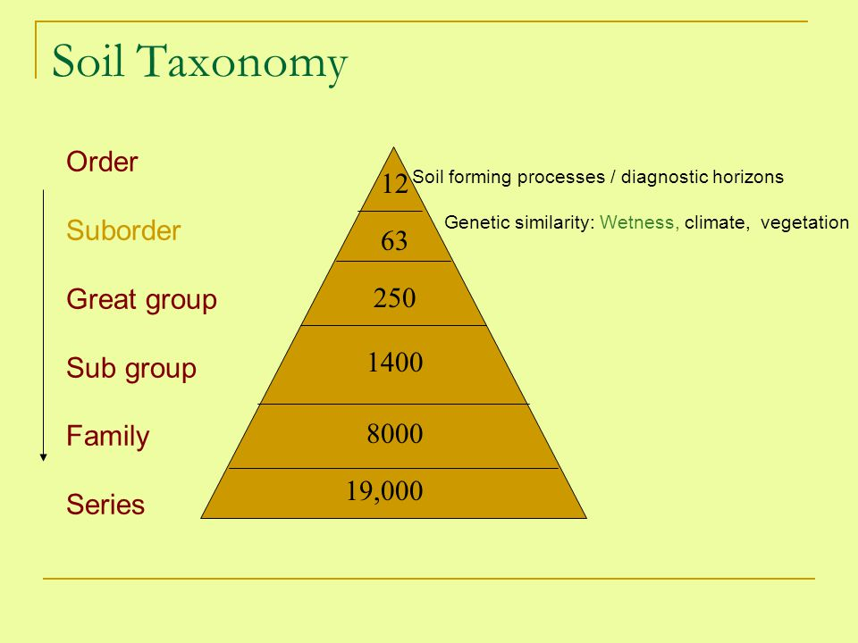 Soil Taxonomy Order Suborder Great group Sub group Family Series 12 19,000 Soil forming processes / diagnostic horizons Genetic similarity: Wetness, c