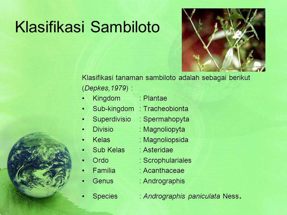 Khasiat Sambiloto  Sambiloto mengandung senyawa flavonoid yang bersifat mencegah sekaligus menghancurkan penggumpalan darah.