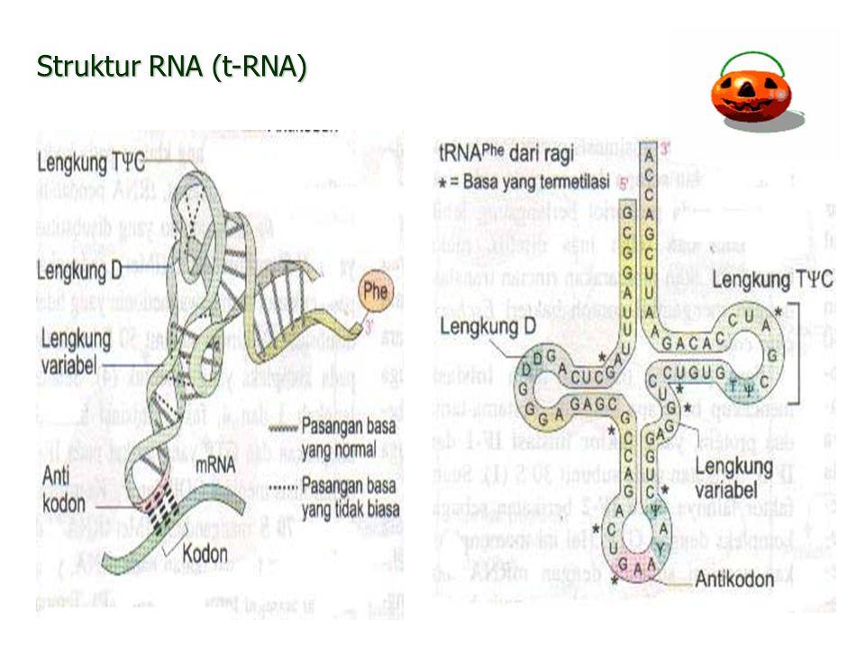 14 Struktur RNA (t-RNA)