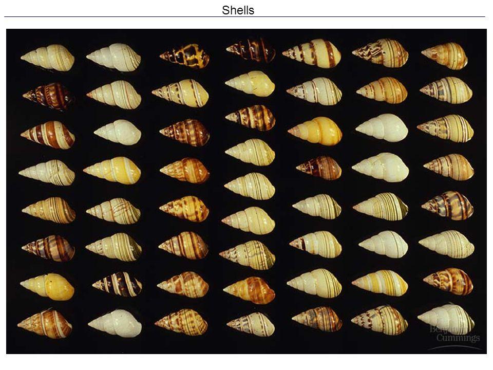 19 Shells