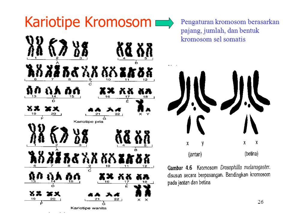 26 Kariotipe Kromosom Pengaturan kromosom berasarkan pajang, jumlah, dan bentuk kromosom sel somatis