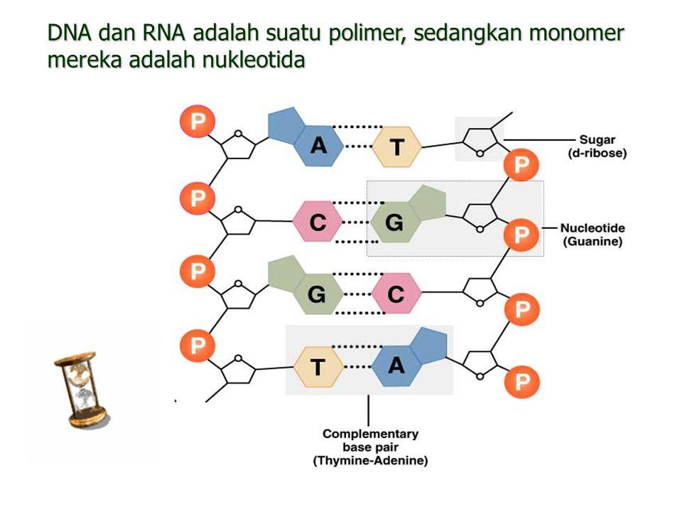 8 DNA dan RNA adalah suatu polimer, sedangkan monomer mereka adalah nukleotida