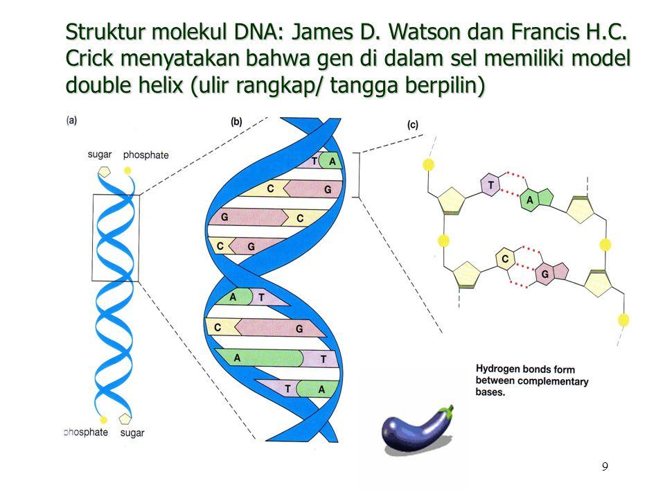 9 Struktur molekul DNA: James D. Watson dan Francis H.C. Crick menyatakan bahwa gen di dalam sel memiliki model double helix (ulir rangkap/ tangga ber