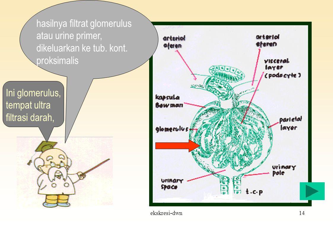 ekskresi-dwn13 Ingat…! Tak semua ginjal punya glomerulus