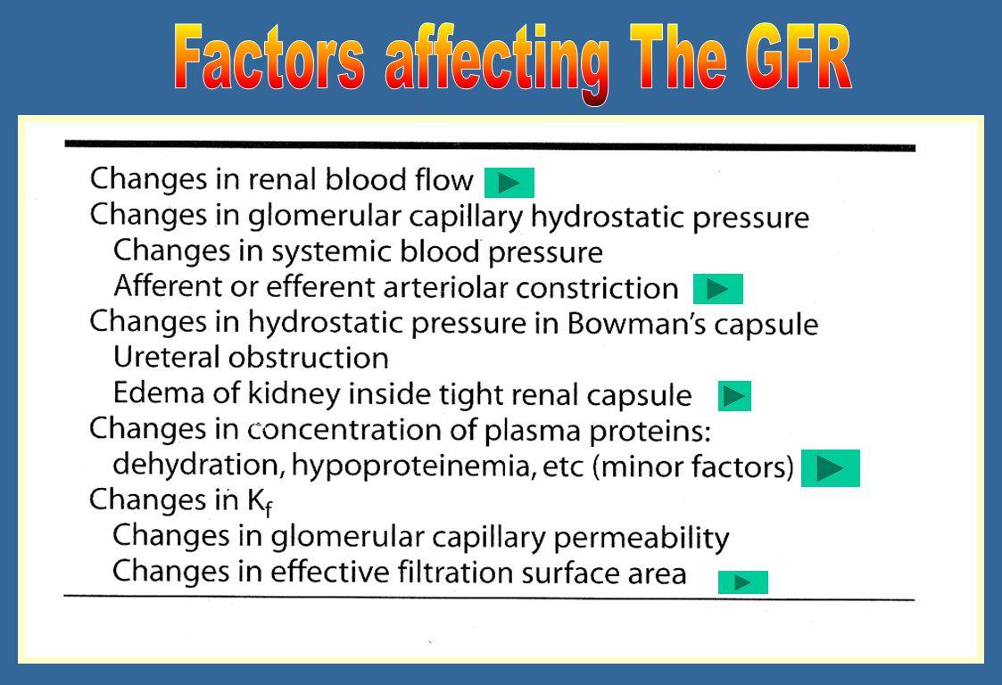 ekskresi-dwn17 GFR = K f [(P GC – P T ) – (  GC –  T )] Kf = koefisien ultrafiltrasi glomerular (tergantung pada konduktivitas hidrolik-a.l.