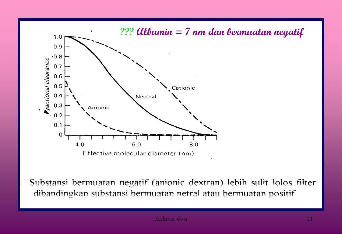 ekskresi-dwn20 PERMEABILITAS KAPILER GLOMERULUS = 50 x PERMEABILITAS KAPILER OTOT SKELETAL  Bahan netral lolos filter jika berdiameter 8 nm  bahan bermuatan negatif lebih sulit lolos filter karena sialoprotein endotel bermuatan negatif