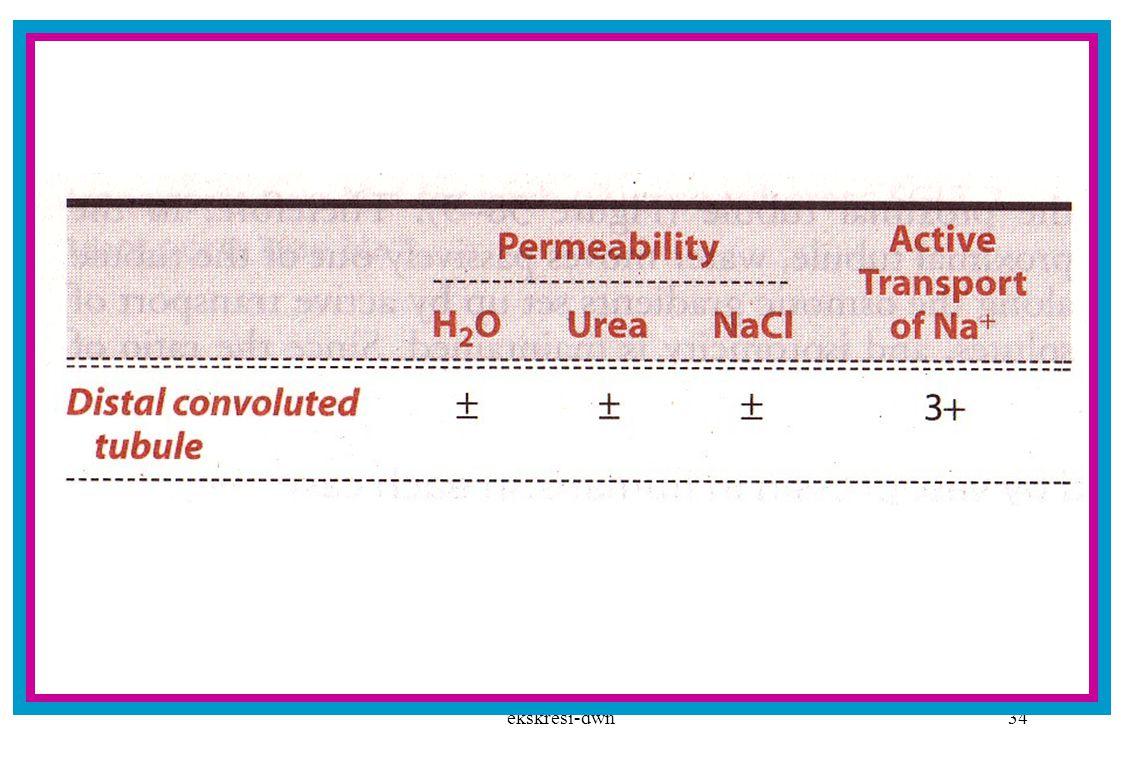 ekskresi-dwn33 Reabsorbsi di tubulus kontortus distal dan kolektivus