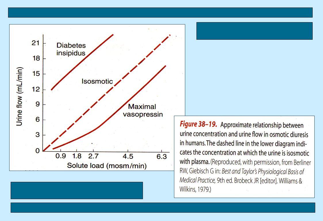 ekskresi-dwn37 ADH (vasopressin) --> Meningkatkan reabsorbsi air di tub.