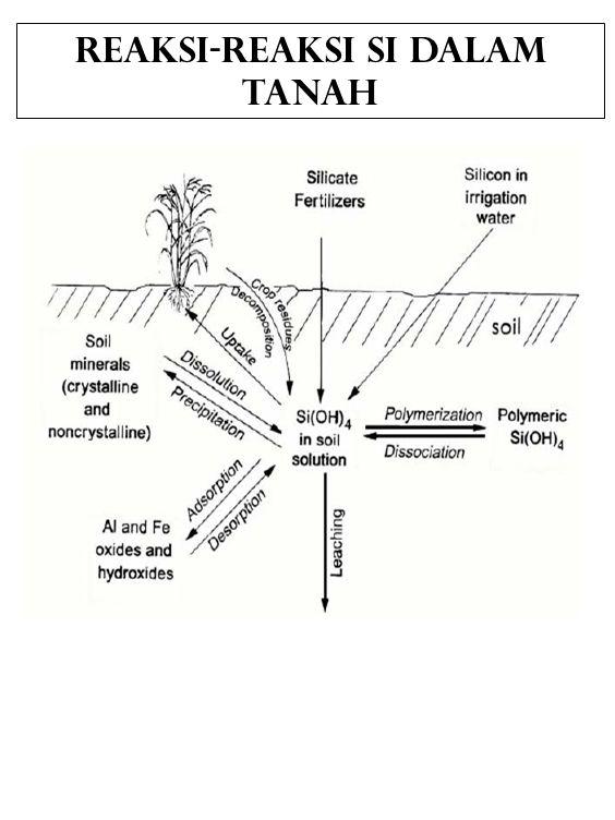 Reaksi-reaksi Si dalam tanah