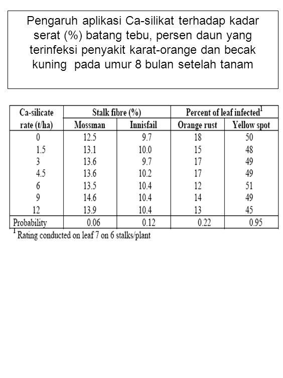 Pengaruh aplikasi Ca-silikat terhadap kadar serat (%) batang tebu, persen daun yang terinfeksi penyakit karat-orange dan becak kuning pada umur 8 bulan setelah tanam