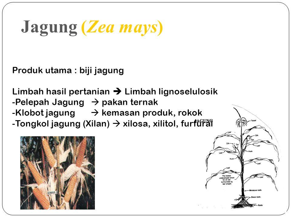 Produk utama : biji jagung Limbah hasil pertanian  Limbah lignoselulosik -Pelepah Jagung  pakan ternak -Klobot jagung  kemasan produk, rokok -Tongk
