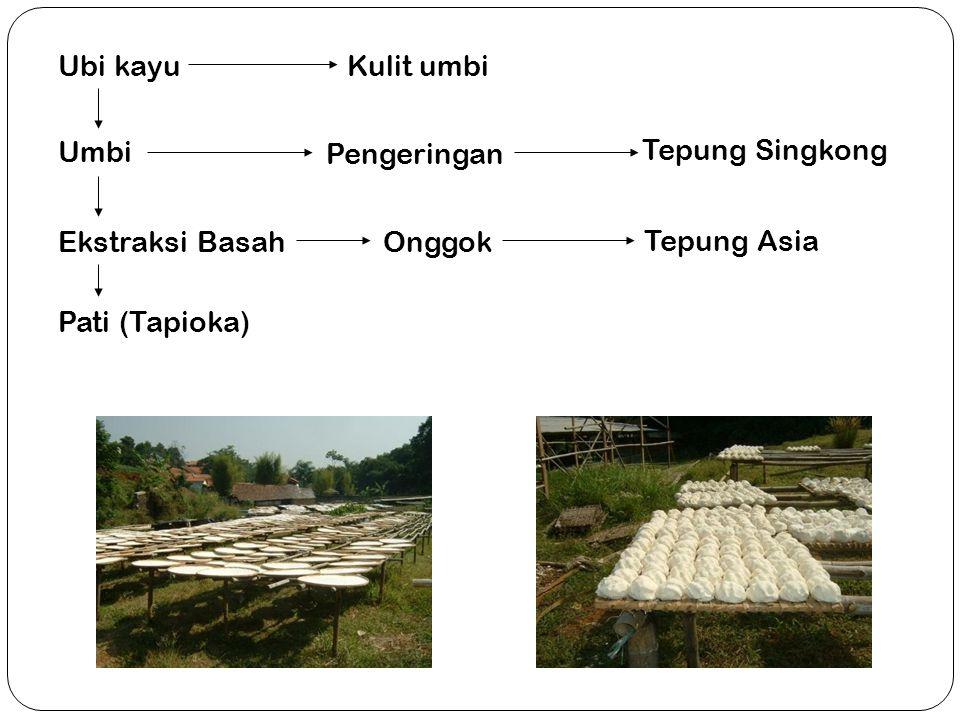 Umbi Kulit umbiUbi kayu Pengeringan Ekstraksi BasahOnggok Pati (Tapioka) Tepung Singkong Tepung Asia Pengeringan TapiokaPengeringan Onggok