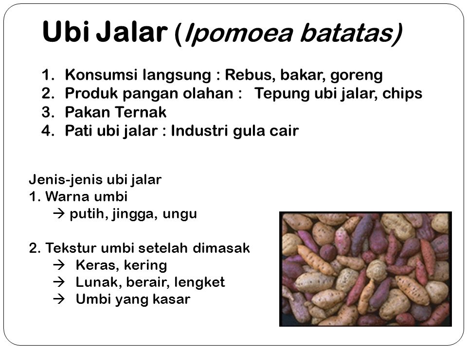 Ubi Jalar (Ipomoea batatas) 1.Konsumsi langsung : Rebus, bakar, goreng 2.Produk pangan olahan : Tepung ubi jalar, chips 3.Pakan Ternak 4.Pati ubi jala