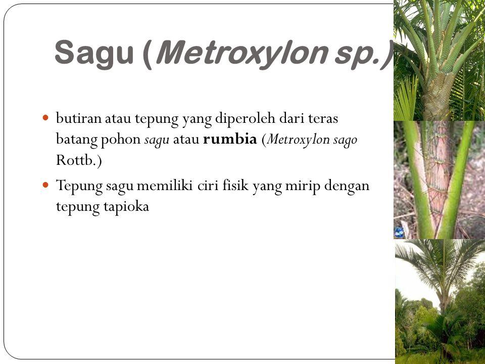 Sagu (Metroxylon sp.) butiran atau tepung yang diperoleh dari teras batang pohon sagu atau rumbia (Metroxylon sago Rottb.) Tepung sagu memiliki ciri f