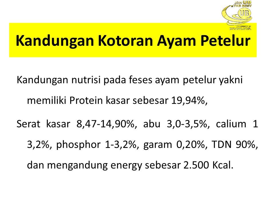 Kandungan Kotoran Ayam Petelur Kandungan nutrisi pada feses ayam petelur yakni memiliki Protein kasar sebesar 19,94%, Serat kasar 8,47-14,90%, abu 3,0-3,5%, calium 1 3,2%, phosphor 1-3,2%, garam 0,20%, TDN 90%, dan mengandung energy sebesar 2.500 Kcal.