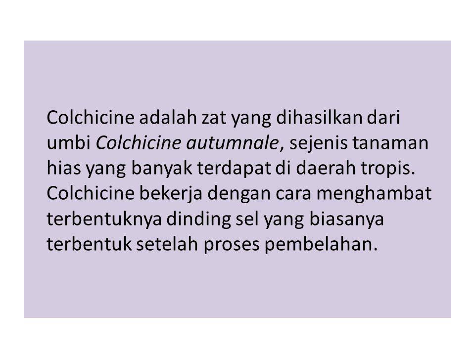 Colchicine adalah zat yang dihasilkan dari umbi Colchicine autumnale, sejenis tanaman hias yang banyak terdapat di daerah tropis. Colchicine bekerja d