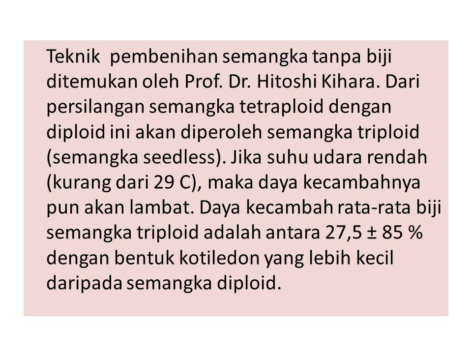 Teknik pembenihan semangka tanpa biji ditemukan oleh Prof. Dr. Hitoshi Kihara. Dari persilangan semangka tetraploid dengan diploid ini akan diperoleh