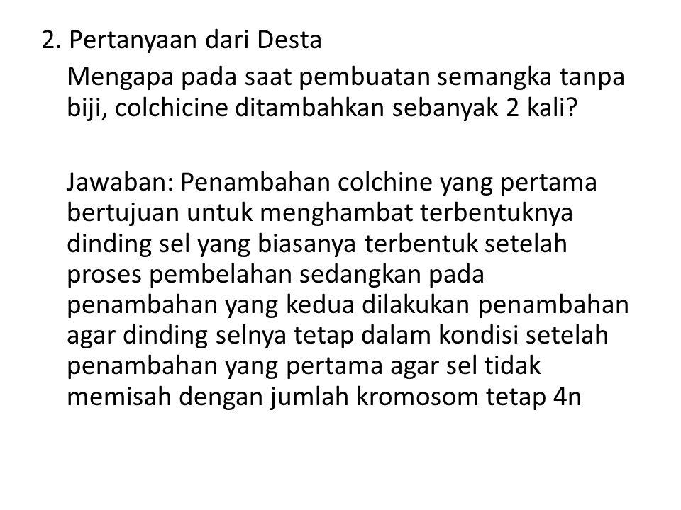 2. Pertanyaan dari Desta Mengapa pada saat pembuatan semangka tanpa biji, colchicine ditambahkan sebanyak 2 kali? Jawaban: Penambahan colchine yang pe