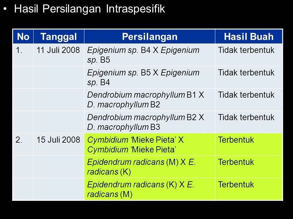 Hasil Persilangan Intraspesifik NoTanggalPersilanganHasil Buah 1.11 Juli 2008Epigenium sp. B4 X Epigenium sp. B5 Tidak terbentuk Epigenium sp. B5 X Ep