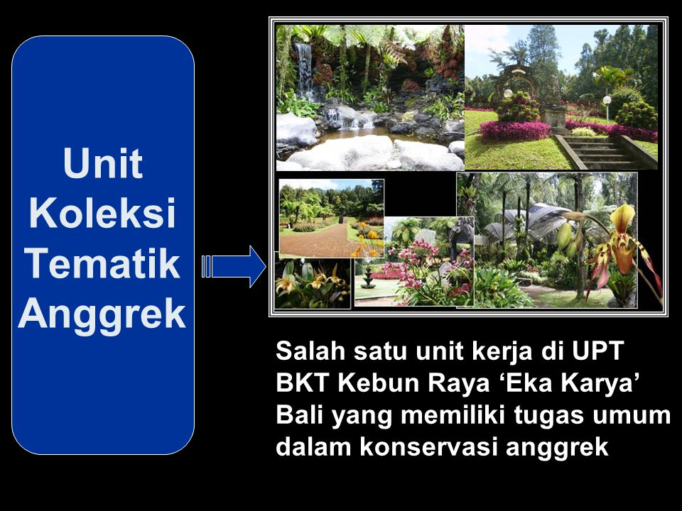 Unit Koleksi Tematik Anggrek Salah satu unit kerja di UPT BKT Kebun Raya 'Eka Karya' Bali yang memiliki tugas umum dalam konservasi anggrek